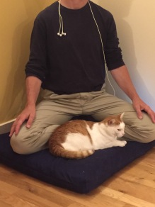 Meditating kitty.